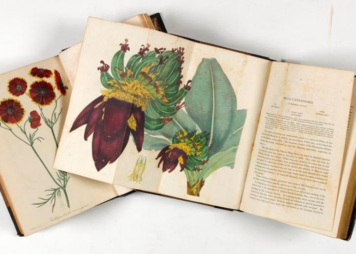 P00246910x: Paxton's Magazine Of Botany, And Register Of Flowering Plants, by Joseph Paxton, 1834-1838, in Armagh Robinson Library
