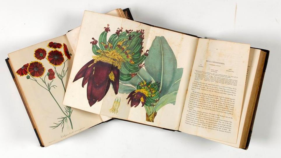 'Botany : the Science of Beauty' in Armagh Robinson Library