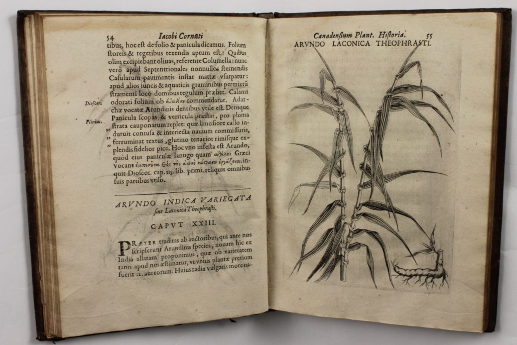 Page 54 of Canadensium Plantarum Historia