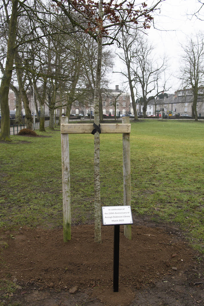 250th anniversary tree Armagh Robinson Library